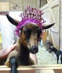 goat my bday